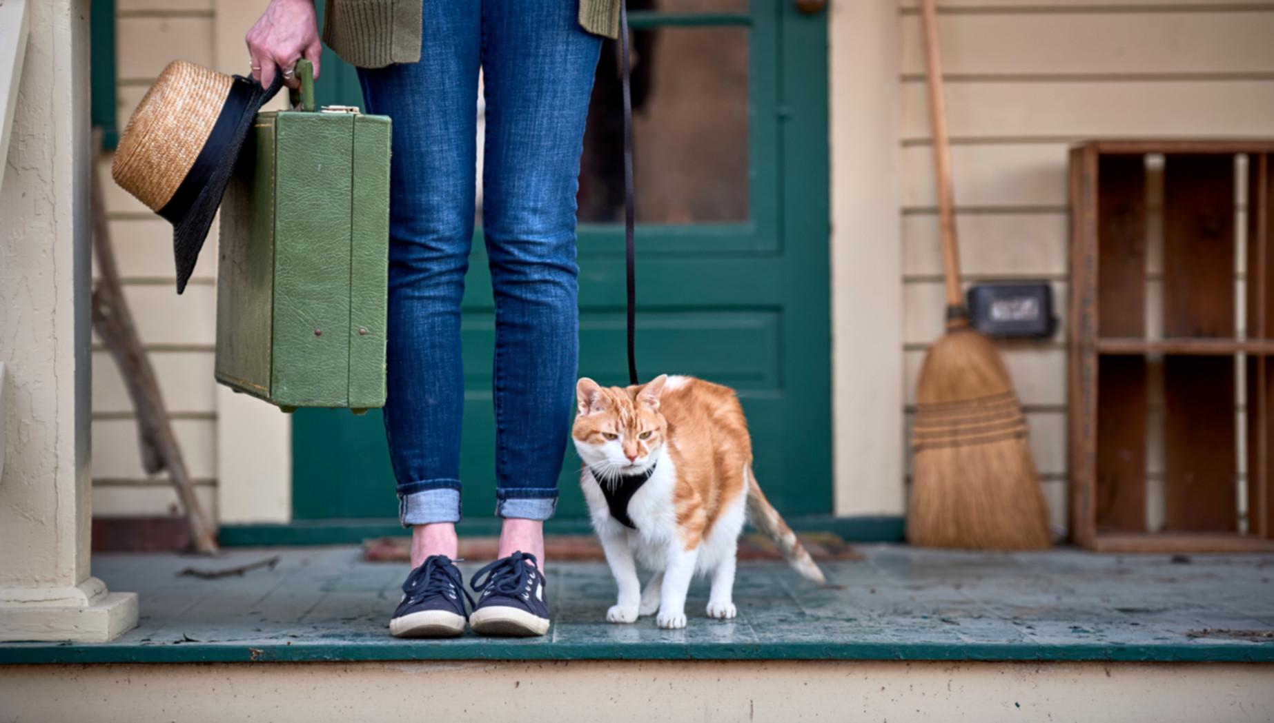 Frau mit Katze vor dem Umzug